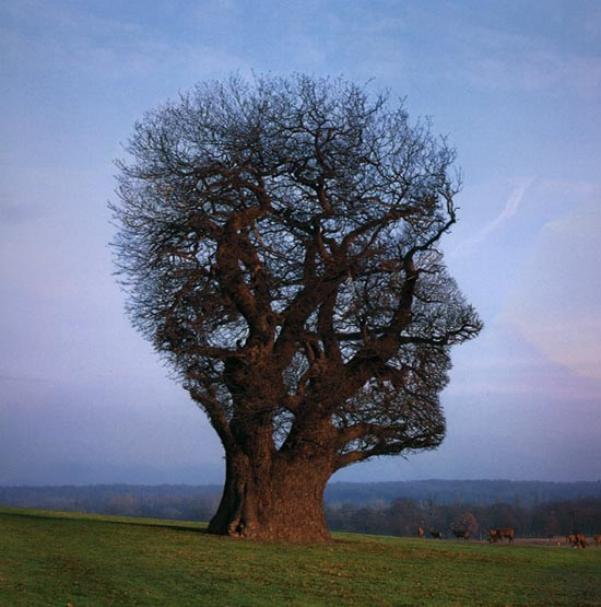 Tree head illusion